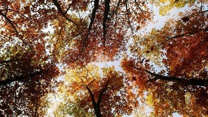 Теплый сентябрь обойдет ряд сибирских регионов