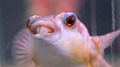 Томский ученый инициировал масштабное исследование рыбной фауны в России