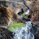 Жительница Якутии спаслась от медведя криком