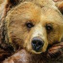 Крупный медведь перепугал рабочих под Новокузнецком