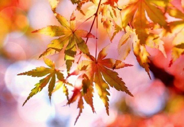 Прогноз погоды на 14 октября: на западе прохладно и дожди, в остальных областях сухо и тепло