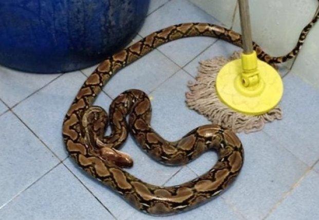 В Таиланде змея укусила женщину на унитазе