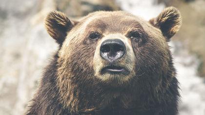 Жители Новокузнецка заметили медведя на дачных участках
