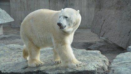Житель Якутии чудом остался в живых после встречи с белым медведем