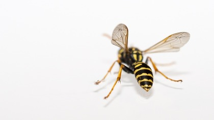 Известный эколог погибла после укуса осы в Москве