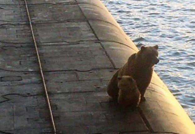 На Камчатке возле подлодки застрелили медведицу с детенышем (видео)