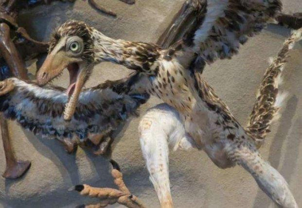 Ученые обнаружили в Антарктиде окаменелости необычных птиц