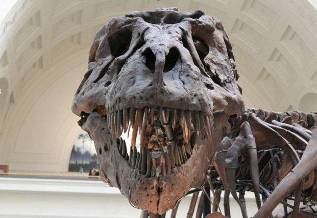 Ученые обнаружили останки динозавров, переплывших океан