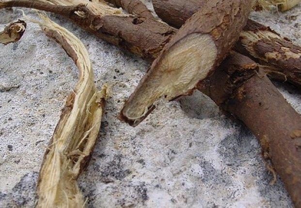Ученые назвали природное средство, подавляющее COVID