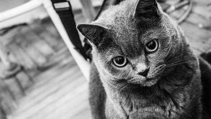 Москвич выбросил из окна двух котов из-за ревности