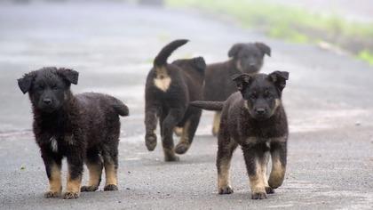 Дикие псы около детского сада напугали новокузнечан