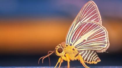 Сибирские ученые обнаружили новый вид бабочек на Алтае