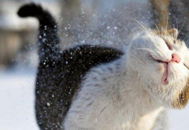 Прогноз погоды на 21 января: морозы отступят с большинства территорий