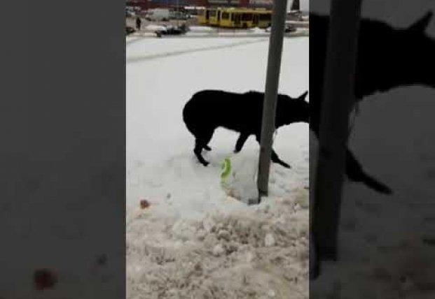Во Львове мужчина бросил собаку на морозе, оставив с ней записку (видео)