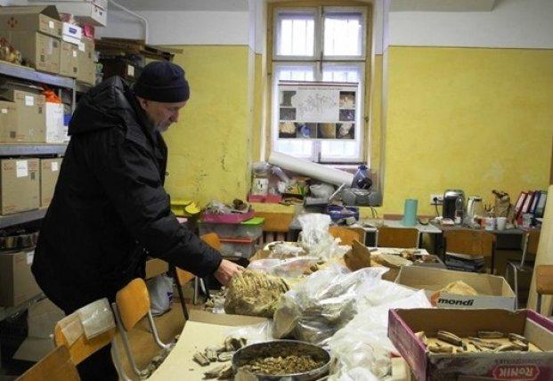 В Черновицкой области обнаружили зуб мамонта (фото)