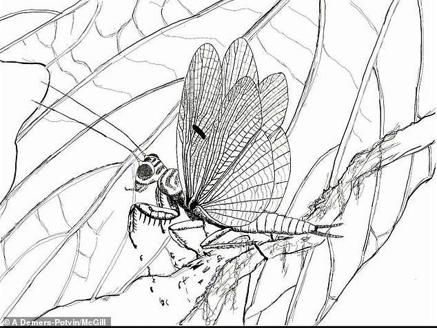 Ученые нашли останки насекомого, жившего на Земле 100 млн лет назад (фото)