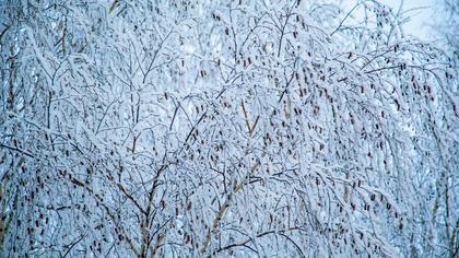 Синоптики предупредили кузбассовцев об аномально холодной погоде