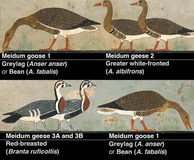 Ученые разгадали тайну египетской фрески, которой 4,6 тыс. лет