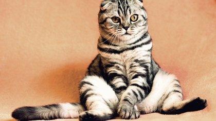 Петербуржец потребовал у суда выселить из коммунальной квартиры кошку и попугая