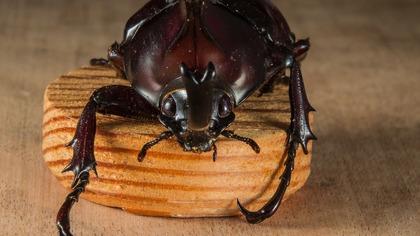 Рой черных жуков оккупировал дом австралийца