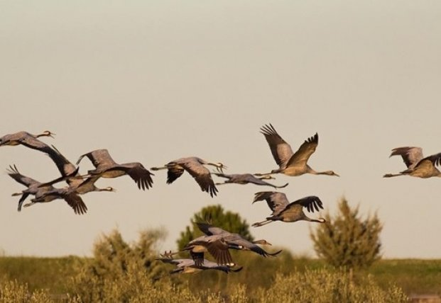 Названа причина смерти птиц в заповеднике