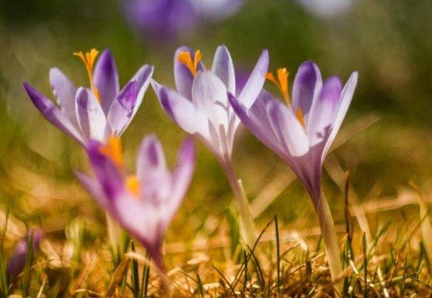 Прогноз погоды на 30 марта: весна несмелыми шагами идет в Украину