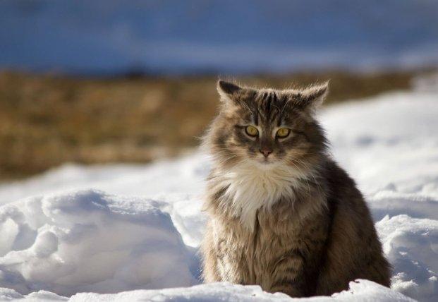 Прогноз погоды на 12 марта: в Украину идут снегопады