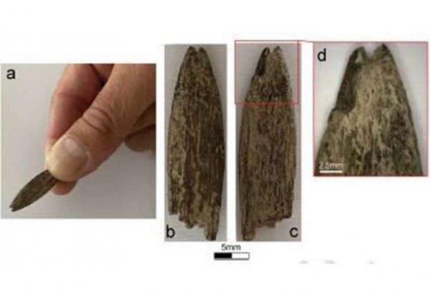 В Австралии обнаружен редкий костяной артефакт
