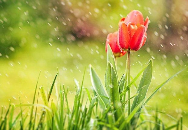 Прогноз погоды на 14 апреля: в Украину идет похолодание