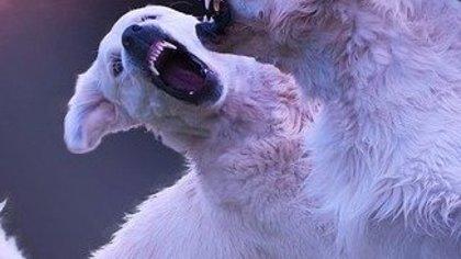 Жители Тюменской области пожаловались на местного организатора собачьих боев