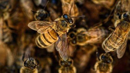Совещания с пчеловодами пройдут в Кузбассе после массовой гибели пчел в 2020
